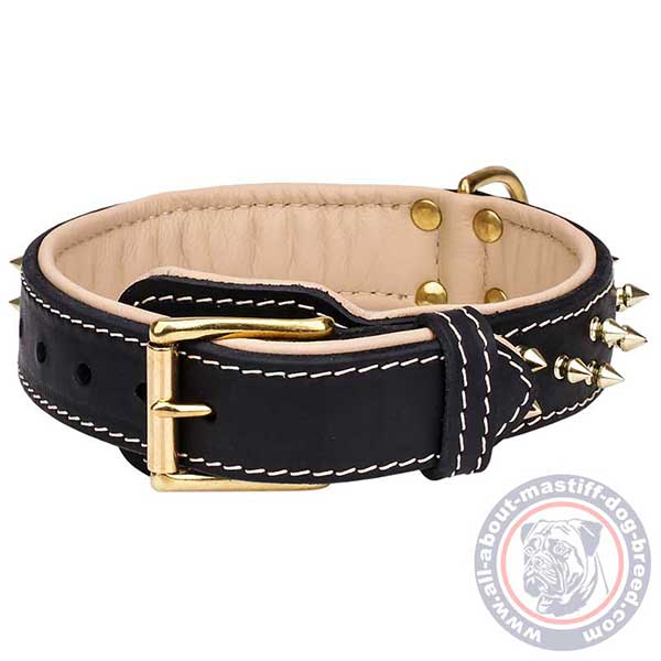 Mastiff leather collar with brass plated hardware