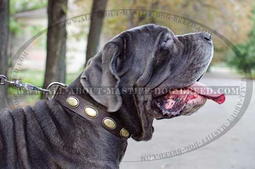 Durable Decorated Leather Mastino Napoletano Collar