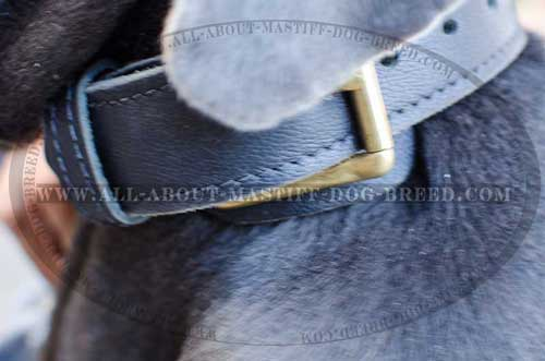 Mastino Napoletano Leather Collar with Brass Buckle