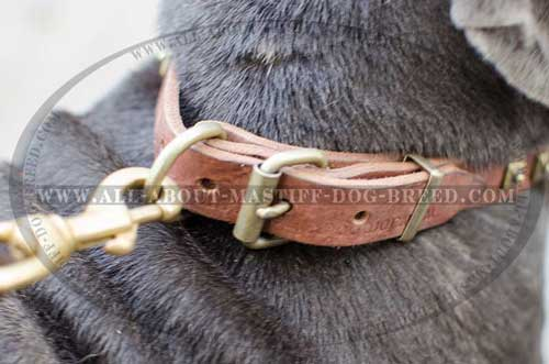 Mastino Napoletano collar with durable hardware