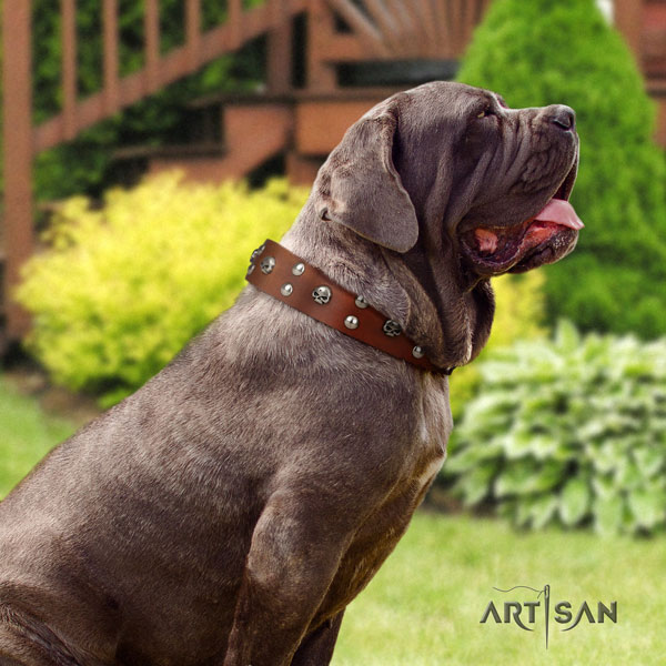 Mastino Napoletano unusual natural genuine leather collar with embellishments for your pet