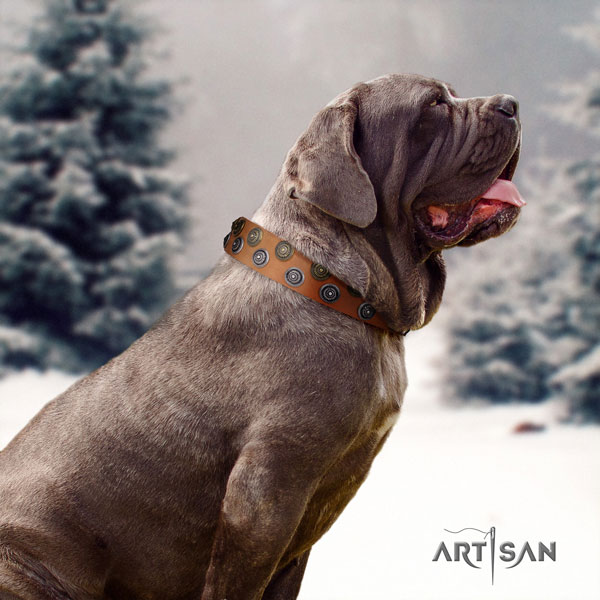 Mastino Napoletano awesome natural genuine leather collar with adornments for your dog