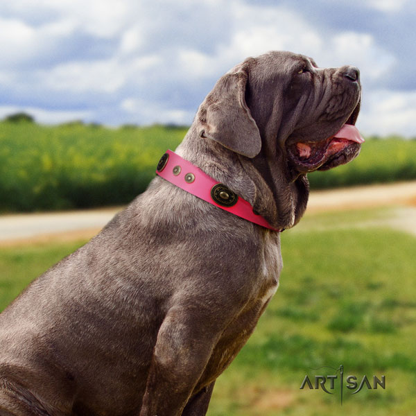 Mastino Napoletano easy to adjust natural genuine leather collar with studs for your canine