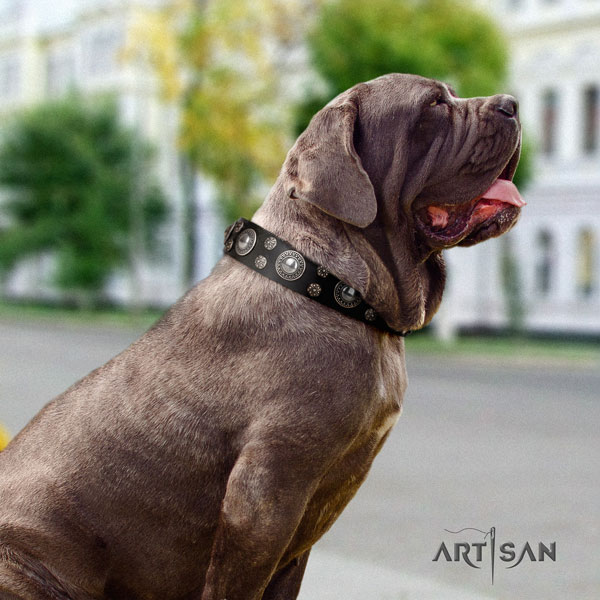 Mastino Napoletano best quality leather collar with adornments for your four-legged friend