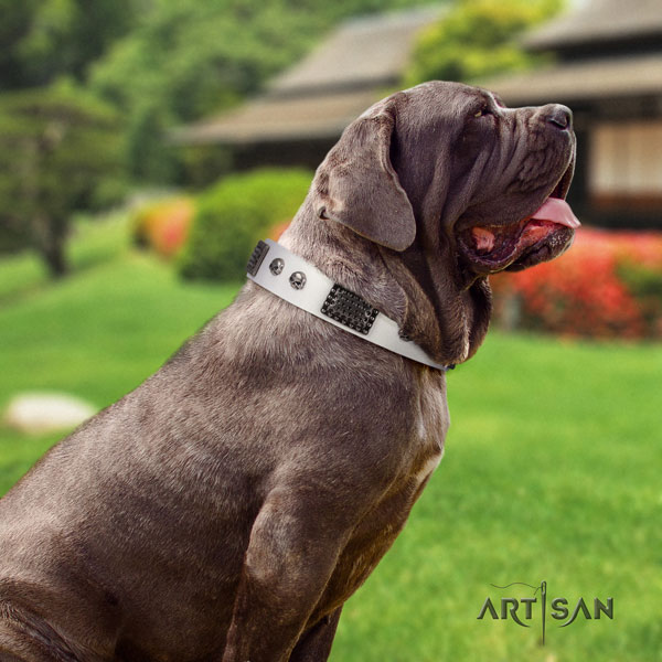 Mastino Napoletano top quality natural genuine leather collar with embellishments for your four-legged friend