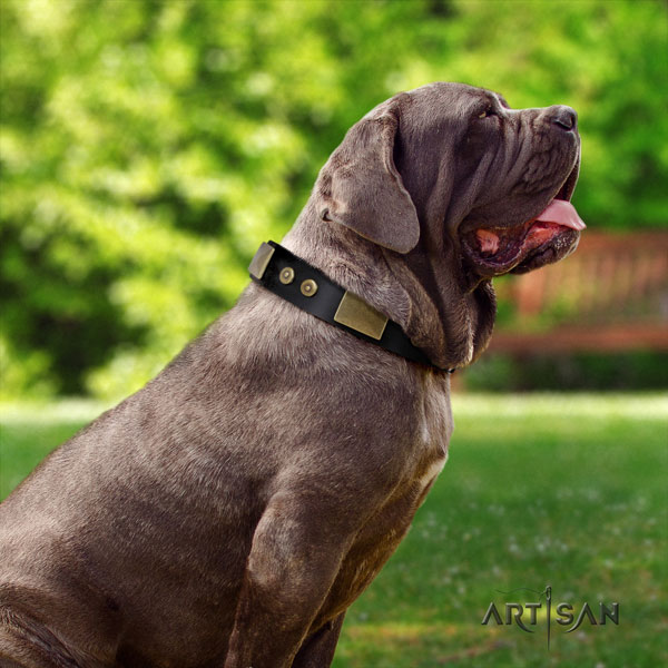 Mastino Napoletano exquisite natural genuine leather collar with studs for your canine