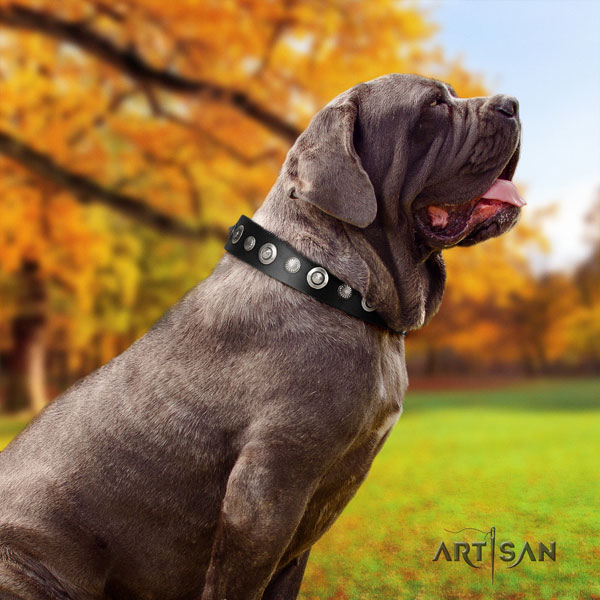 Mastino Napoletano designer full grain leather collar with decorations for your pet