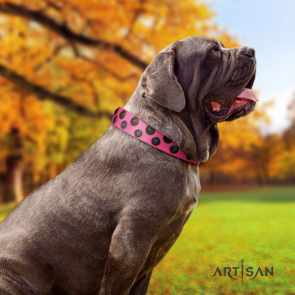 Mastino Napoletano extraordinary leather collar with studs for your pet
