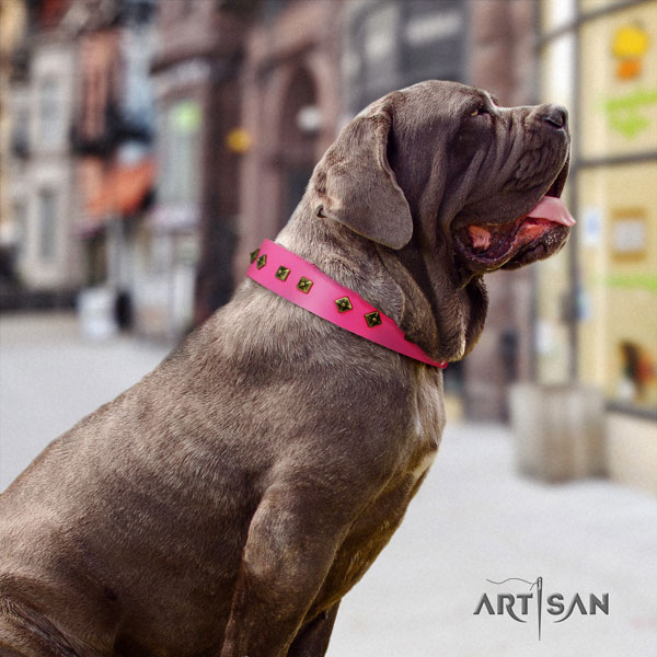 Mastino Napoletano stylish design leather collar with studs for your canine