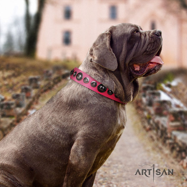 Mastino Napoletano fashionable leather collar with decorations for your four-legged friend