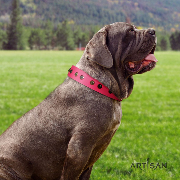 Mastino Napoletano awesome full grain natural leather collar with decorations for your canine