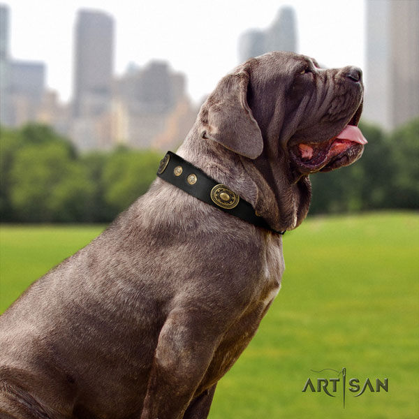 Mastino Napoletano amazing full grain genuine leather collar with embellishments for your canine