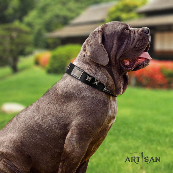 Mastino Napoletano stunning full grain natural leather collar with adornments for your pet