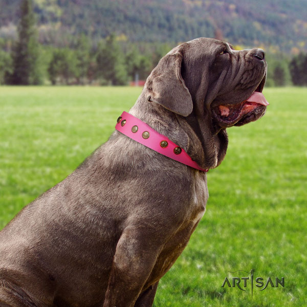 Mastino Napoletano easy wearing genuine leather collar with embellishments for your dog