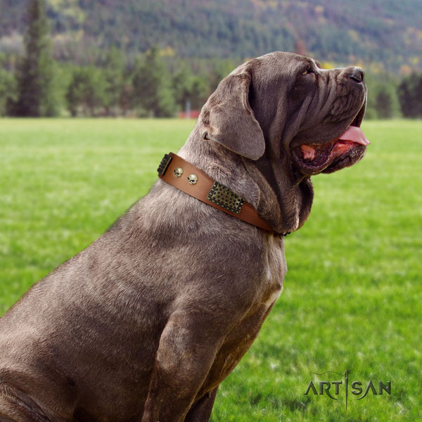 Mastino Napoletano easy adjustable full grain leather collar with adornments for your pet