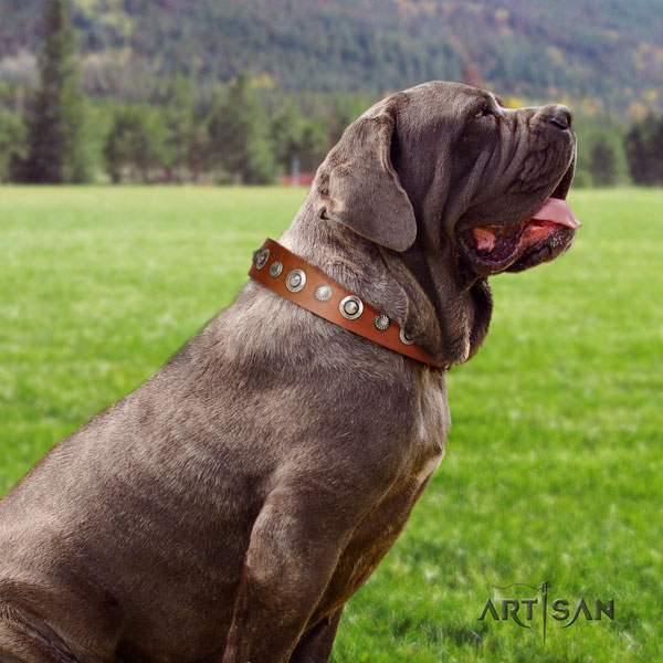 Mastino Napoletano adjustable full grain genuine leather collar with embellishments for your dog