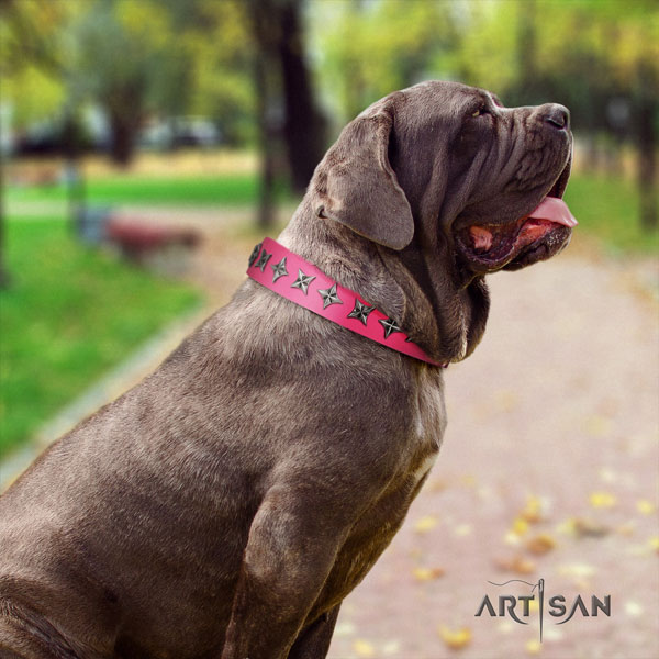 Mastino Napoletano exceptional full grain genuine leather collar with studs for your pet