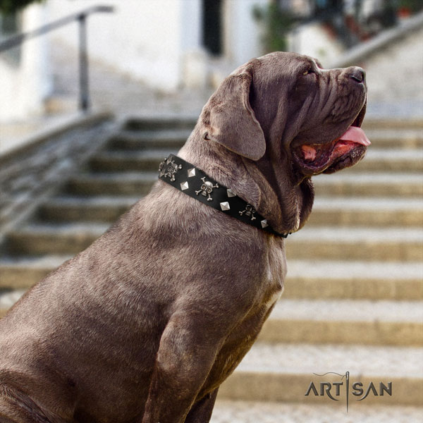 Mastino Napoletano easy wearing full grain genuine leather collar with adornments for your canine