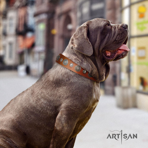 Mastino Napoletano exceptional full grain natural leather collar with studs for your doggie