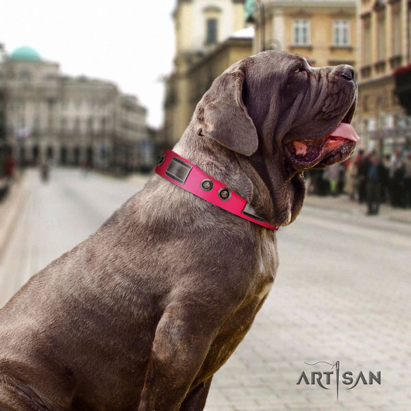 Mastino Napoletano impressive full grain genuine leather collar with adornments for your canine