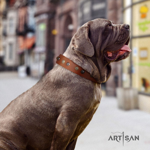 Mastino Napoletano stylish full grain natural leather collar with adornments for your doggie