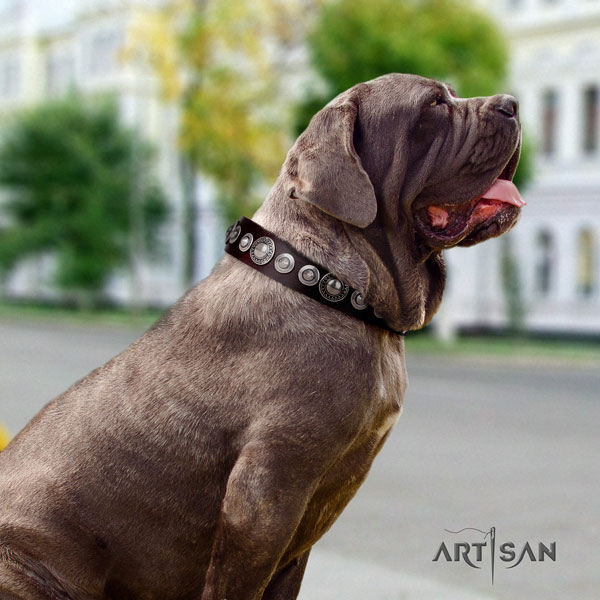 Mastino Napoletano top notch leather collar with adornments for your pet