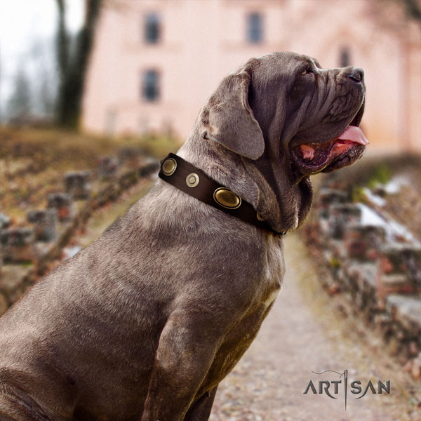 Mastino Napoletano exceptional full grain leather collar with adornments for your pet