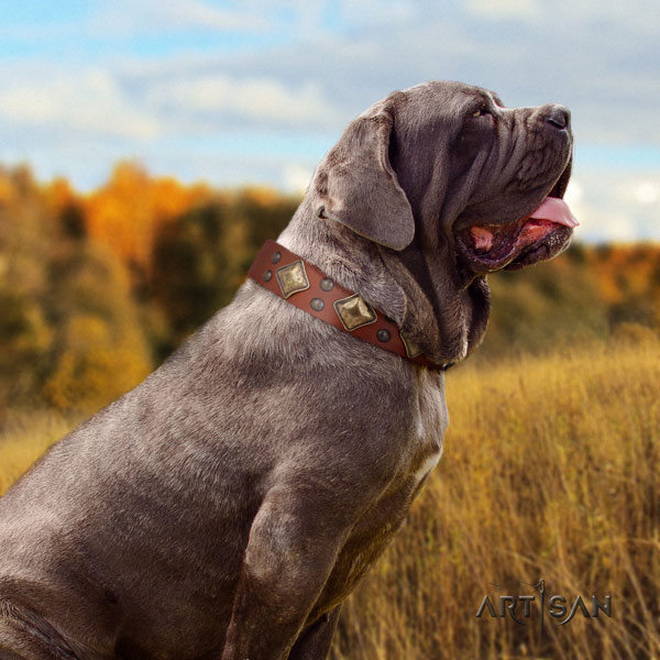 Mastino Napoletano unique leather collar with adornments for your four-legged friend