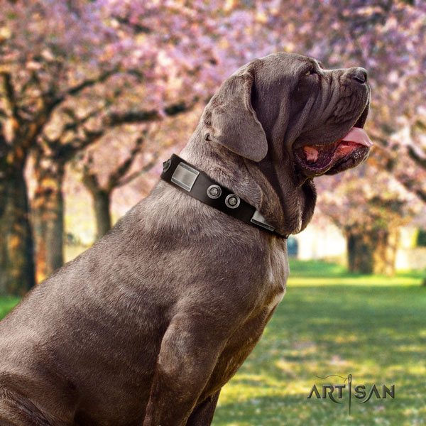 Mastino Napoletano adjustable full grain leather collar with adornments for your dog