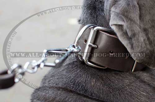 Mastino Napoletano leather collar with stainless buckle and D-ring