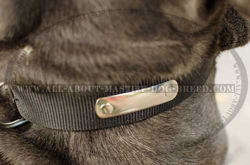 Mastino Napoletano nylon collar with name plate