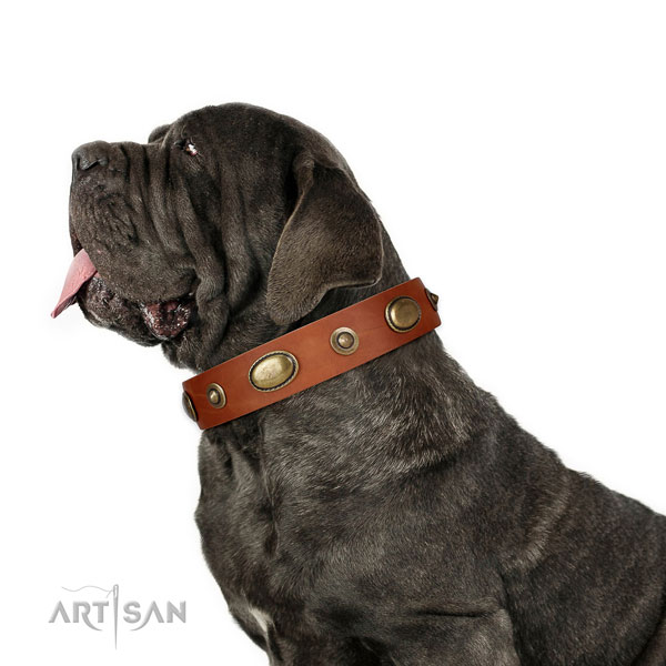 Everyday walking dog collar of genuine leather with impressive adornments