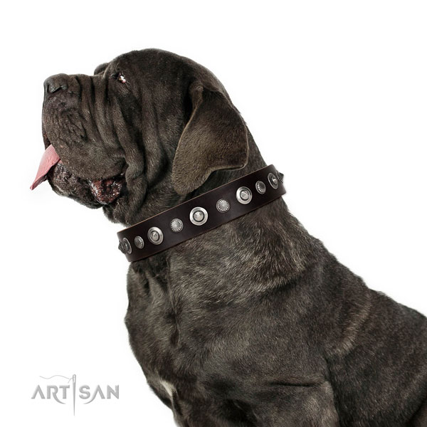 Top notch natural leather dog collar with extraordinary adornments