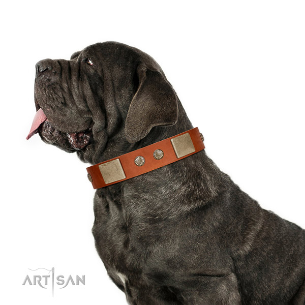Significant genuine leather collar for your handsome dog
