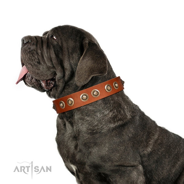 Comfortable wearing dog collar of leather with stunning studs