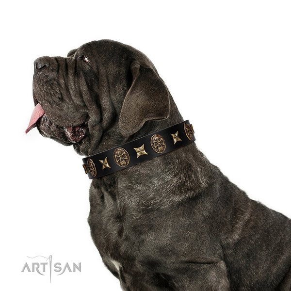 Walking dog collar of genuine leather with amazing adornments