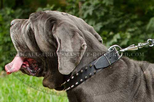 Mastino Neapoletano Spiked Leather Dog Collar Decorated in Two Lines