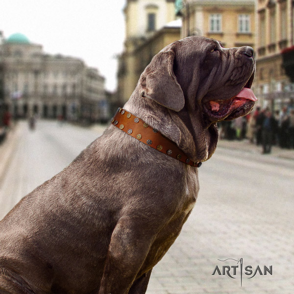 Mastino Neapoletano amazing embellished full grain genuine leather dog collar for handy use