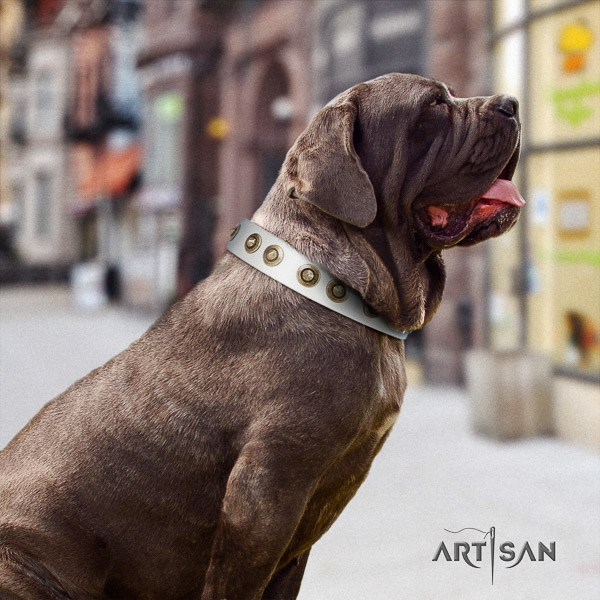 Mastino Neapoletano exceptional embellished full grain genuine leather dog collar for fancy walking