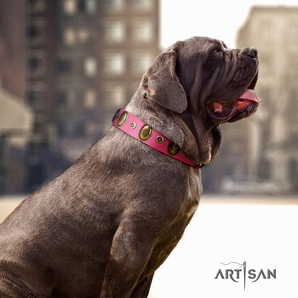 Mastino Neapoletano amazing decorated full grain leather dog collar for daily walking