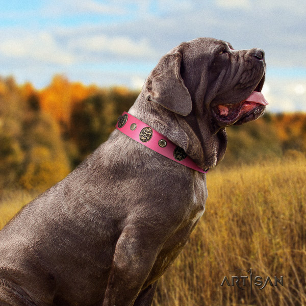Mastino Neapoletano impressive decorated full grain natural leather dog collar for daily walking
