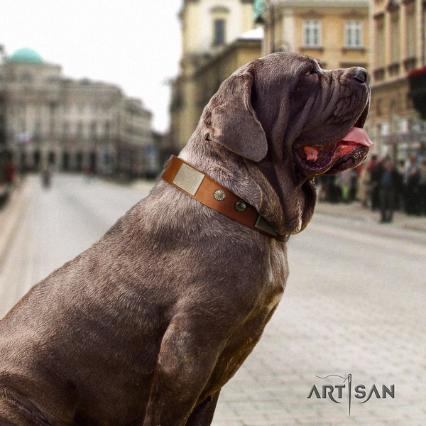 Mastino Neapoletano trendy decorated full grain genuine leather dog collar for daily walking