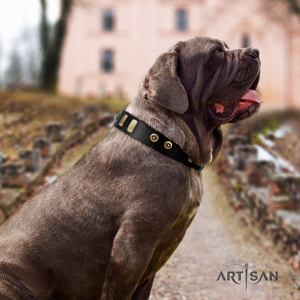 Mastino Neapoletano significant adorned genuine leather dog collar for comfy wearing