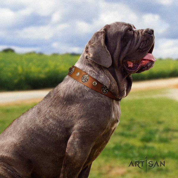 Mastino Neapoletano top notch decorated full grain natural leather dog collar for handy use