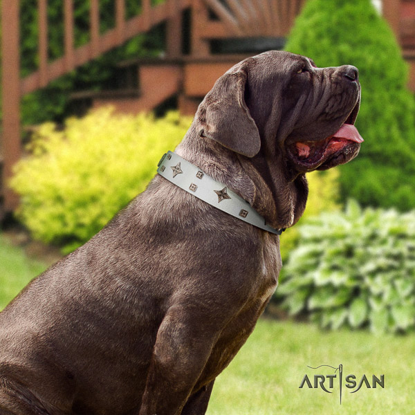 Mastino Neapoletano exceptional adorned full grain natural leather dog collar for walking