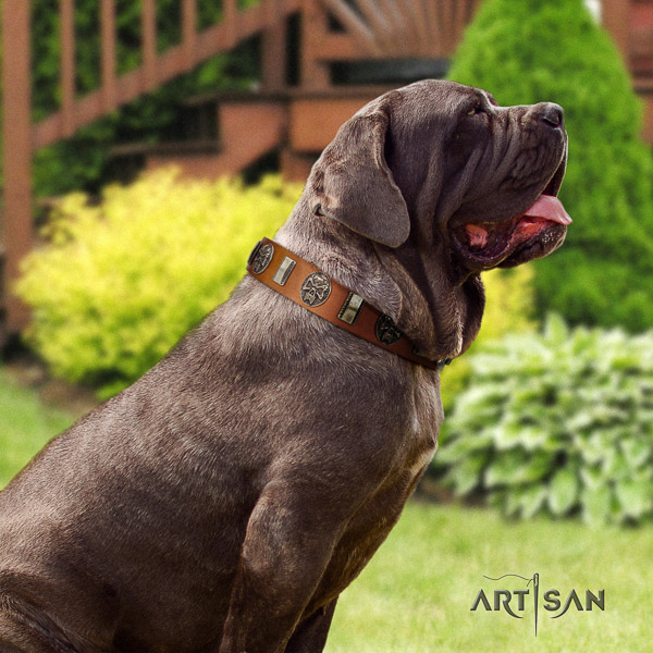 Mastino Neapoletano exceptional adorned natural leather dog collar for fancy walking