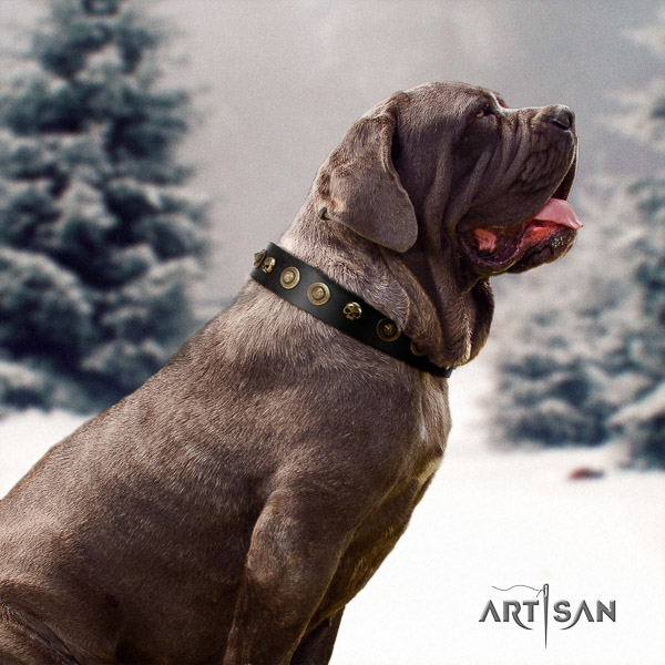 Mastino Neapoletano awesome studded full grain natural leather dog collar for easy wearing