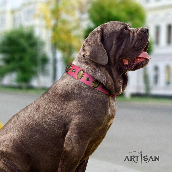 Mastino Neapoletano extraordinary adorned natural leather dog collar for fancy walking