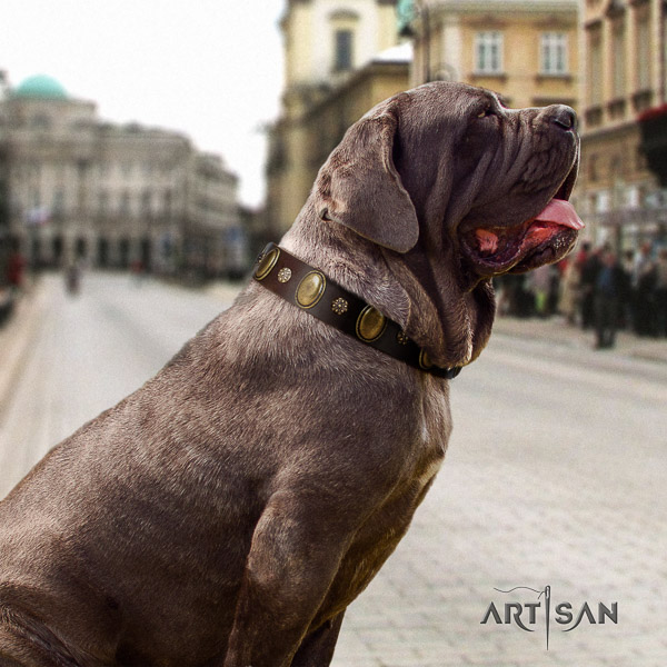 Mastino Neapoletano unusual studded full grain natural leather dog collar for daily walking