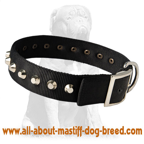 Waking nylon dog collar with buckle